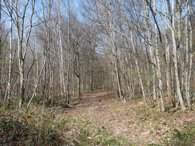 Un aspect de la forêt