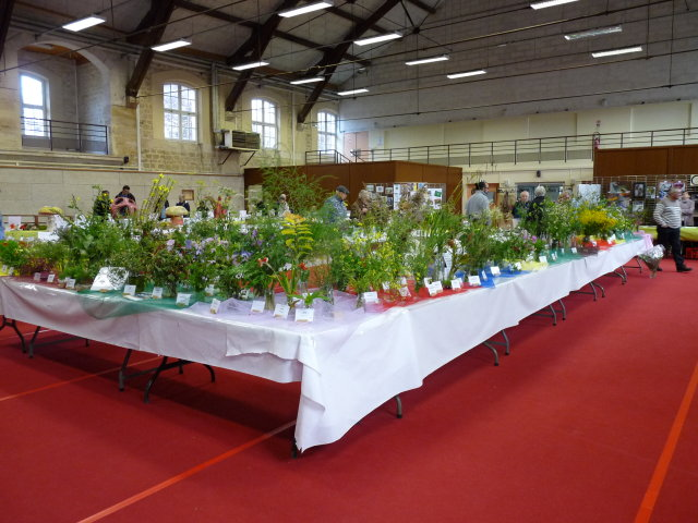 Stand Plantes sauvages